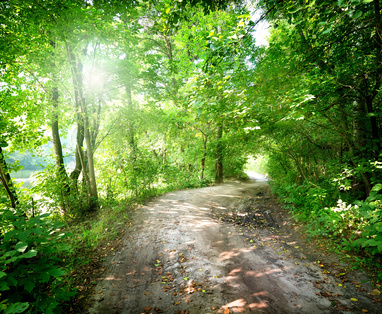 Dawn on the road in the forest in summer