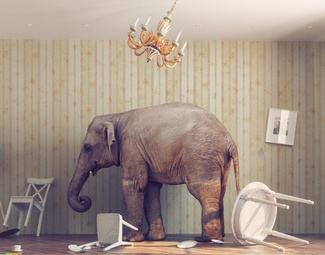 the-elephant-in-the-room:-fear-of-rejection